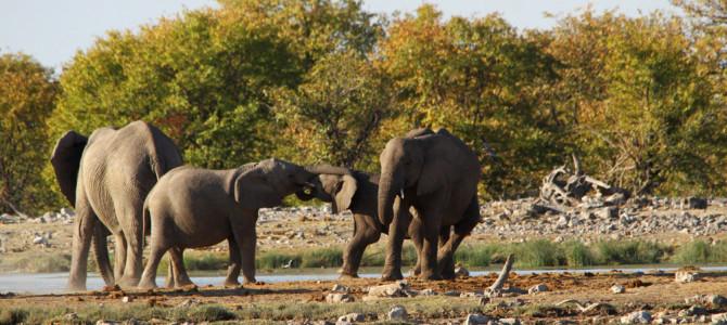 Etosha National Park | Namibia